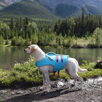 Are Dog Life Vests Just For Boat Use