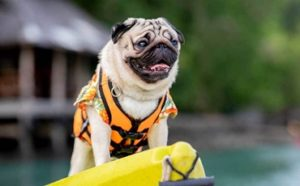 Best Dog Life Jackets Featured