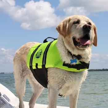 Dog Life Jacket Buying Guide