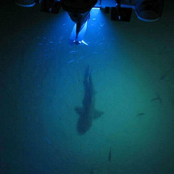 Fishing With Underwater Boat Lights